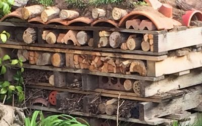 The Bug Hotel