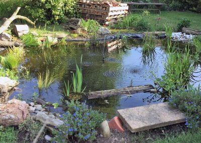pond - finished