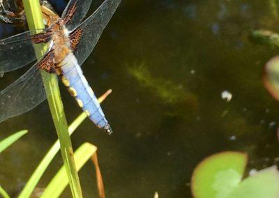 pond guest